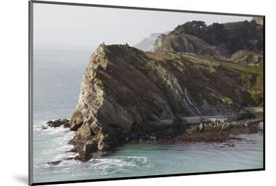 Cliffs at Lulworth Cove, in the Jurassic Coast World Heritage Site, Dorset, Great Britain-Nigel Hicks-Mounted Photographic Print
