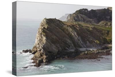 Cliffs at Lulworth Cove, in the Jurassic Coast World Heritage Site, Dorset, Great Britain-Nigel Hicks-Stretched Canvas Print