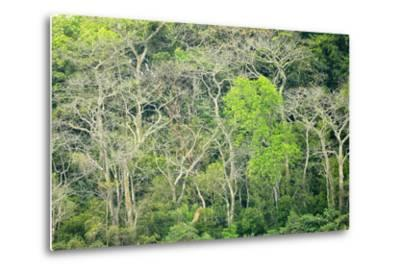 The Dense Tropical Jungle of Barro Colorado Island-Jonathan Kingston-Metal Print