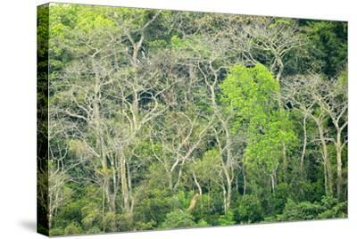 The Dense Tropical Jungle of Barro Colorado Island-Jonathan Kingston-Stretched Canvas Print