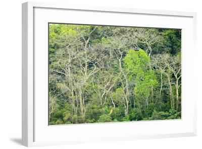 The Dense Tropical Jungle of Barro Colorado Island-Jonathan Kingston-Framed Photographic Print