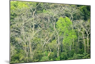 The Dense Tropical Jungle of Barro Colorado Island-Jonathan Kingston-Mounted Photographic Print