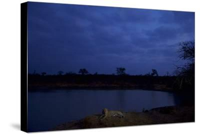 A Male Leopard Rests at the Water's Edge in South Africa's Sabi Sand Game Reserve-Steve Winter-Stretched Canvas Print