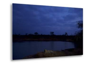 A Male Leopard Rests at the Water's Edge in South Africa's Sabi Sand Game Reserve-Steve Winter-Metal Print