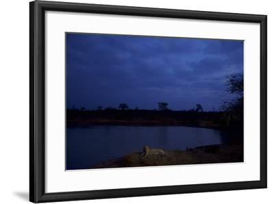 A Male Leopard Rests at the Water's Edge in South Africa's Sabi Sand Game Reserve-Steve Winter-Framed Photographic Print