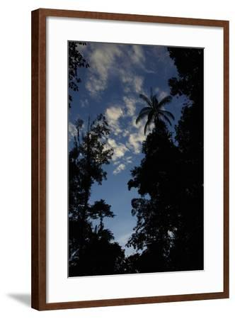 Rainforest Silhouette Against Early Morning Sky-Timothy Laman-Framed Photographic Print
