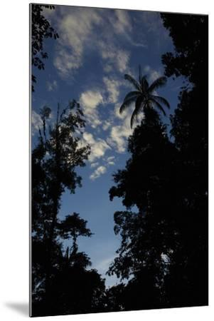 Rainforest Silhouette Against Early Morning Sky-Timothy Laman-Mounted Photographic Print