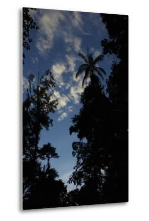 Rainforest Silhouette Against Early Morning Sky-Timothy Laman-Metal Print