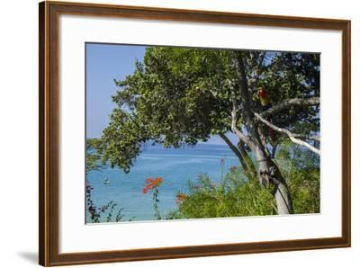 Macaw Perching on the Branch of a Tree with Idyllic Ocean in Background, Hawaii-Peter Mcbride-Framed Photographic Print