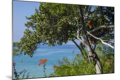 Macaw Perching on the Branch of a Tree with Idyllic Ocean in Background, Hawaii-Peter Mcbride-Mounted Photographic Print