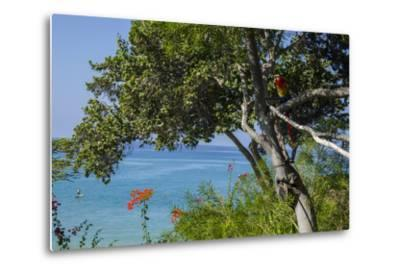 Macaw Perching on the Branch of a Tree with Idyllic Ocean in Background, Hawaii-Peter Mcbride-Metal Print