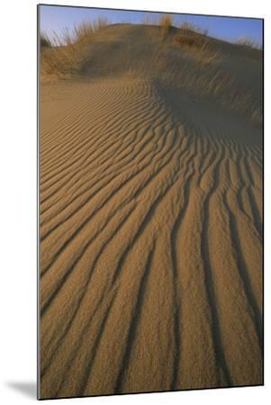 Sand Dune with Ripples Created by Wind-Norbert Rosing-Mounted Photographic Print