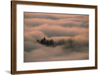 Islands of Trees Peaking Out of Thick Layer of Clouds in the Valley-Norbert Rosing-Framed Photographic Print