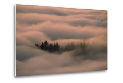 Islands of Trees Peaking Out of Thick Layer of Clouds in the Valley-Norbert Rosing-Metal Print