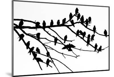 Silhouette of Birds Perched on the Branches of a Dead Tree Above the Occoquan River-Kent Kobersteen-Mounted Photographic Print