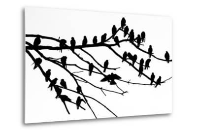 Silhouette of Birds Perched on the Branches of a Dead Tree Above the Occoquan River-Kent Kobersteen-Metal Print