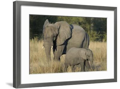 Two Elephants, Adult and Calf, Upper Vumbura Plains, Botswana-Anne Keiser-Framed Photographic Print