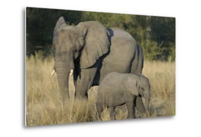 Two Elephants, Adult and Calf, Upper Vumbura Plains, Botswana-Anne Keiser-Metal Print