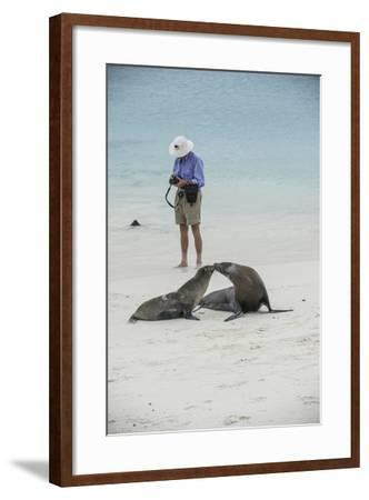 Tourists and Curious Galapagos Sea Lions Mingle on the Beach-Jad Davenport-Framed Photographic Print