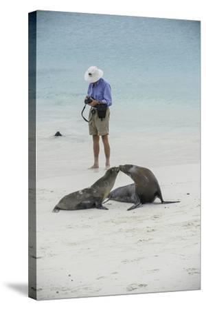 Tourists and Curious Galapagos Sea Lions Mingle on the Beach-Jad Davenport-Stretched Canvas Print