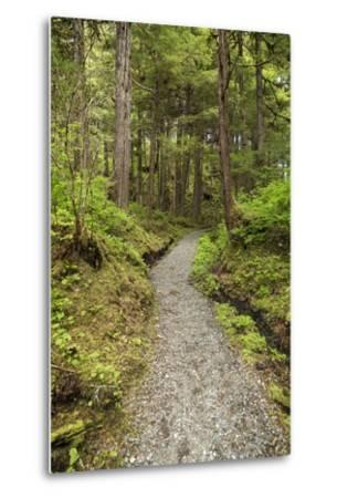 Path Inside Tongass National Forest-Macduff Everton-Metal Print
