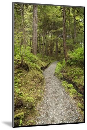 Path Inside Tongass National Forest-Macduff Everton-Mounted Photographic Print