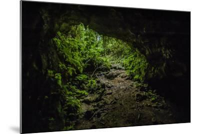 Collapsed Lava Tube in the Highlands of Santa Cruz Island-Jad Davenport-Mounted Photographic Print