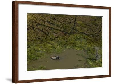 A Lone African Elephant, Loxodonta Africana, Wading in a Water Hole-Beverly Joubert-Framed Photographic Print