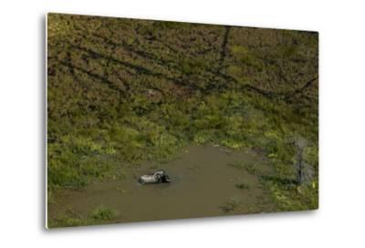 A Lone African Elephant, Loxodonta Africana, Wading in a Water Hole-Beverly Joubert-Metal Print