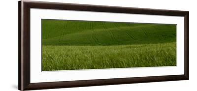 Wheat Fields in Tuscany-Raul Touzon-Framed Photographic Print