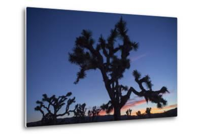 A Joshua Tree Silhouetted Against the Sunset Sky in Lost Horse Valley-Kent Kobersteen-Metal Print