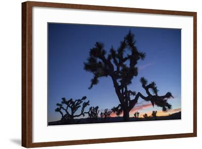 A Joshua Tree Silhouetted Against the Sunset Sky in Lost Horse Valley-Kent Kobersteen-Framed Photographic Print