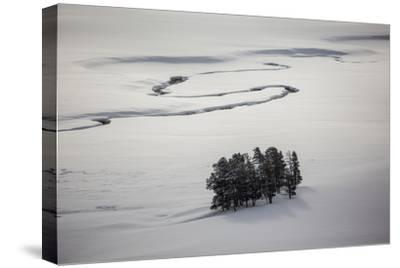 A Stand of Trees Near a River-Cory Richards-Stretched Canvas Print