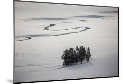 A Stand of Trees Near a River-Cory Richards-Mounted Photographic Print