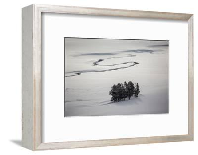 A Stand of Trees Near a River-Cory Richards-Framed Photographic Print