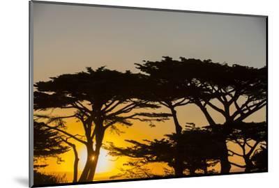 Sunrise in Monterey Bay, California-John Burcham-Mounted Photographic Print