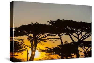Sunrise in Monterey Bay, California-John Burcham-Stretched Canvas Print