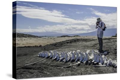 A Tourist Photographing a Whale Skeleton on the Beach-Jad Davenport-Stretched Canvas Print