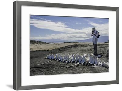A Tourist Photographing a Whale Skeleton on the Beach-Jad Davenport-Framed Photographic Print