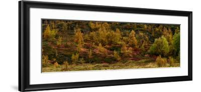 Fall Foliage in Thingvellir National Park, Iceland-Raul Touzon-Framed Photographic Print