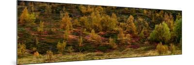 Fall Foliage in Thingvellir National Park, Iceland-Raul Touzon-Mounted Photographic Print