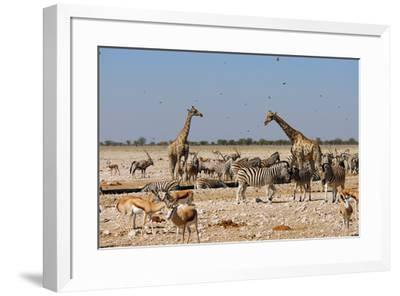 A Group of Animals at the Watering Hole, Giraffe, Springbok, Gemsbok and Zebra-Anne Keiser-Framed Premium Photographic Print