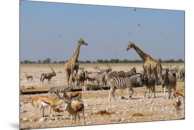 A Group of Animals at the Watering Hole, Giraffe, Springbok, Gemsbok and Zebra-Anne Keiser-Mounted Premium Photographic Print