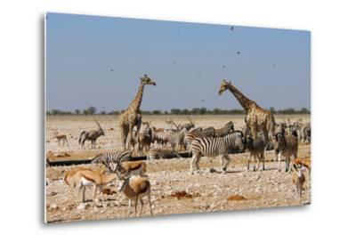 A Group of Animals at the Watering Hole, Giraffe, Springbok, Gemsbok and Zebra-Anne Keiser-Metal Print