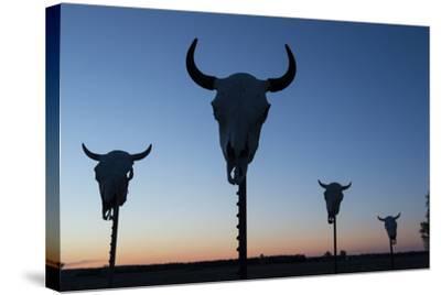 Four Bison Skulls on Posts at Dusk-Joel Sartore-Stretched Canvas Print