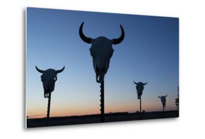 Four Bison Skulls on Posts at Dusk-Joel Sartore-Metal Print