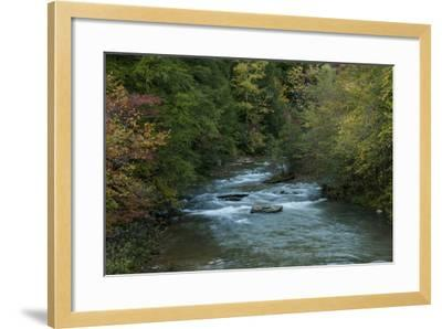 Stream Flowing During Autumn-Karen Kasmauski-Framed Photographic Print