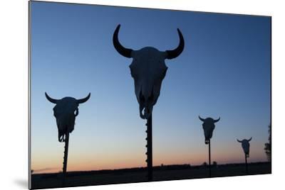 Four Bison Skulls on Posts at Dusk-Joel Sartore-Mounted Photographic Print