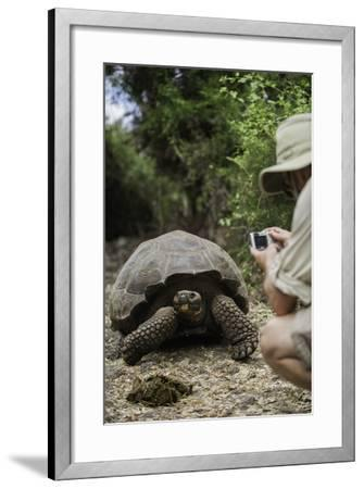 Tourist Photographing a Captive Galapagos Tortoise at the Charles Darwin Research Station-Jad Davenport-Framed Photographic Print