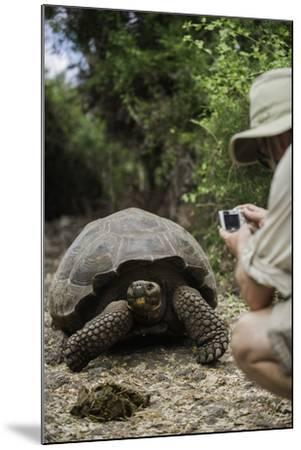Tourist Photographing a Captive Galapagos Tortoise at the Charles Darwin Research Station-Jad Davenport-Mounted Photographic Print